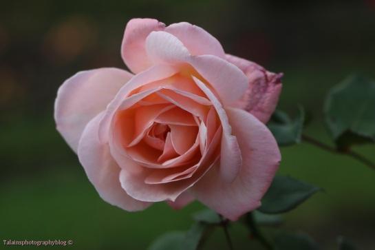 flower-304