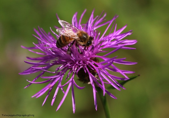 bees-all-026
