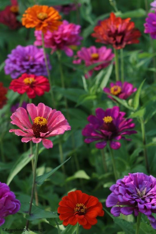 flower-233