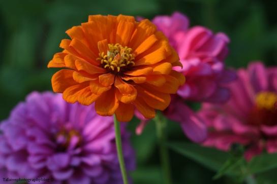 flower-237