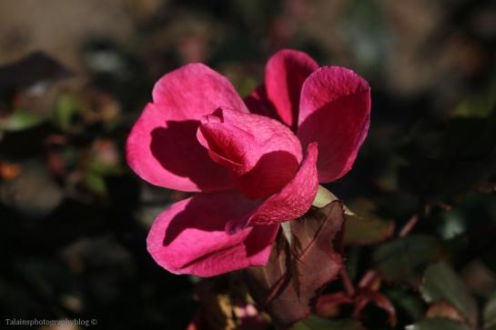 flower-314