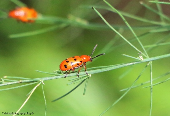 insects-029