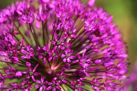 flower-093
