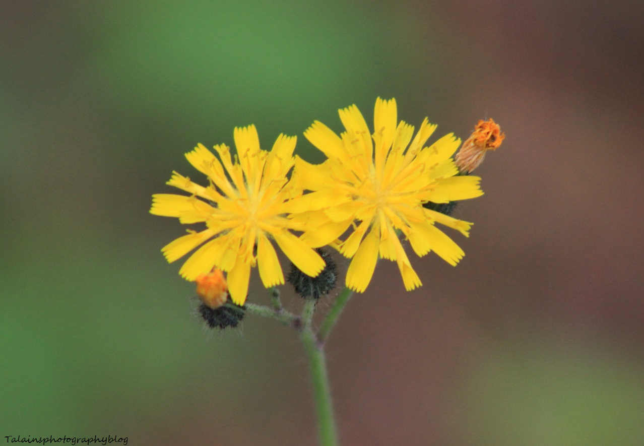 flowers150