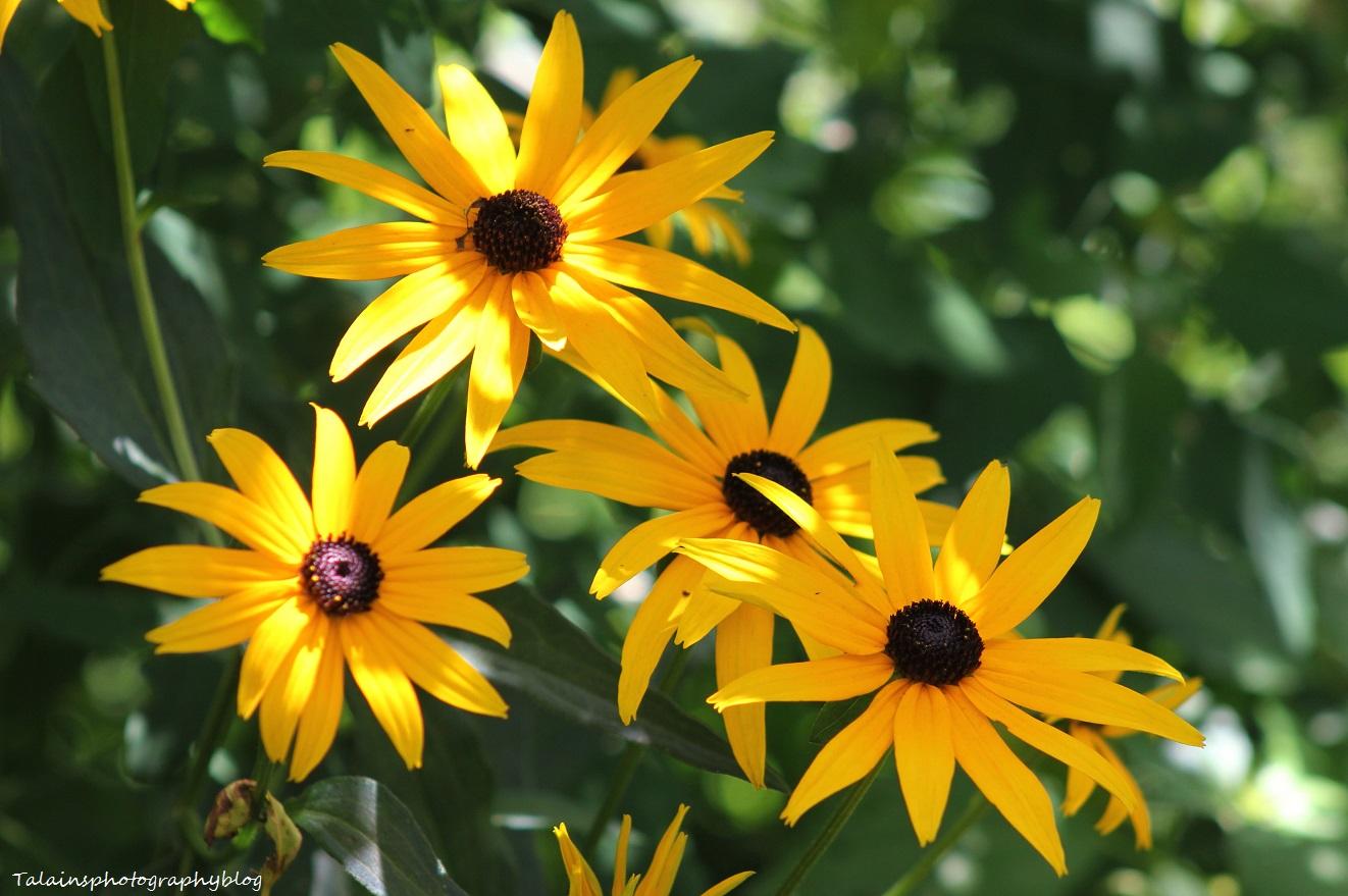 flowers183