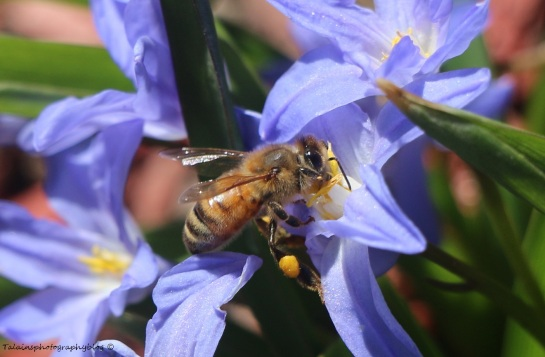 bees-all-011